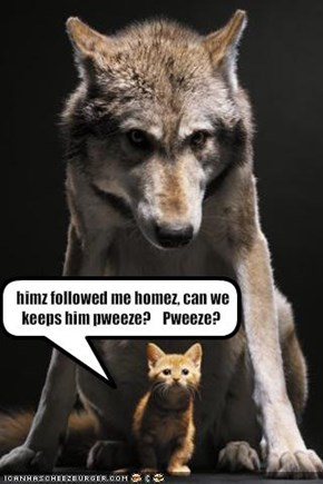 himz followed me homez, can we keeps him pweeze?    Pweeze?