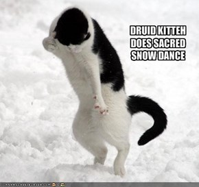 DRUID KITTEH