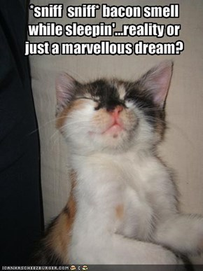 *sniff  sniff* bacon smell while sleepin'...reality or just a marvellous dream?