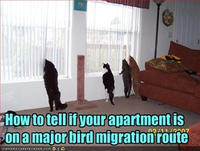 How to tell if your apartment is on a major bird migration route