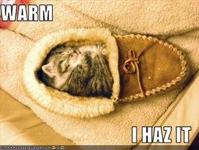 WARM  I HAZ IT