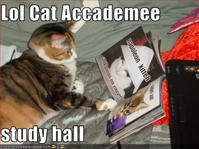 Lol Cat Accademee  study hall