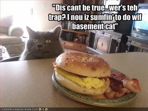 """Dis cant be true...wer's teh trap? I nou iz sumfin' to do wif basement cat"""