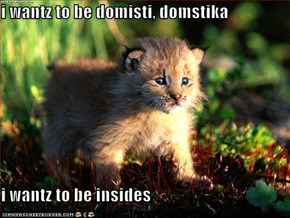 i wantz to be domisti, domstika  i wantz to be insides