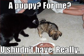 A puppy? For me?  U shudn't have. Really.