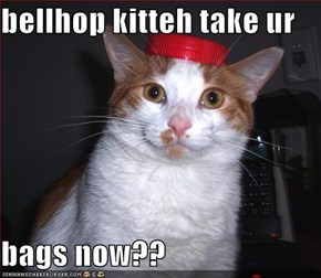 bellhop kitteh take ur   bags now??