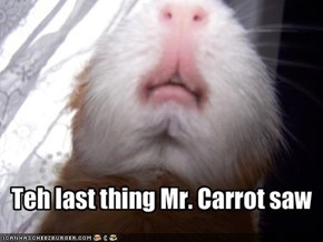 Teh last thing Mr. Carrot saw