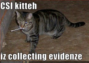 CSI kitteh   iz collecting evidenze