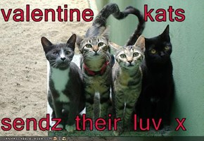 valentine    kats  sendz their luv x