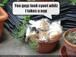 Yoo guyz look cyoot whilz I takes a nap