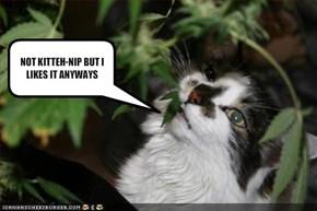 NOT KITTEH-NIP BUT I LIKES IT ANYWAYS