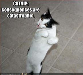 CATNIP: consequences are catastrophic.