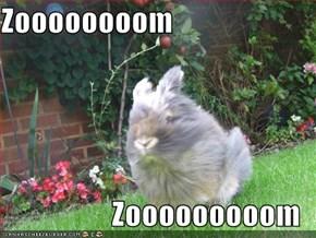 Zoooooooom  Zooooooooom