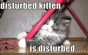 disturbed kitten                   is disturbed......