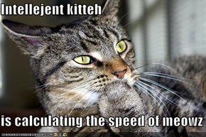Intellejent kitteh  is calculating the speed of meowz