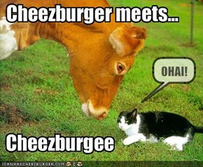 Cheezburger meets...