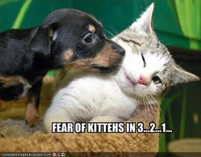FEAR OF KITTEHS IN 3...2...1...