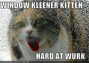 WINDOW KLEENER KITTEH  HARD AT WURK