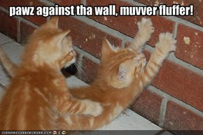 pawz against tha wall, muvver fluffer!