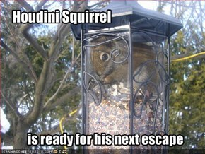 Houdini Squirrel