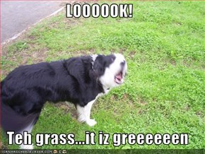 LOOOOOK!  Teh grass...it iz greeeeeen