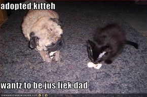 adopted kitteh  wantz to be jus liek dad