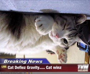 Breaking News - Cat Defiez Gravity..... Cat winz