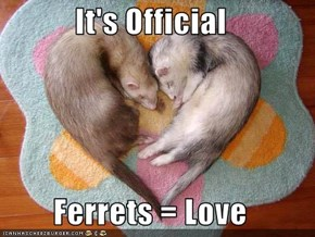 It's Official  Ferrets = Love