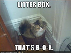 LITTER BOX.  THAT'S B-O-X.
