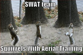 SWAT team  Squirrels With Aerial Training
