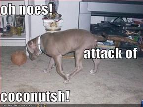 oh noes! attack of coconutsh!