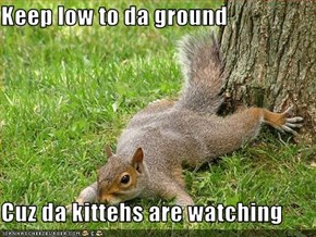 Keep low to da ground  Cuz da kittehs are watching