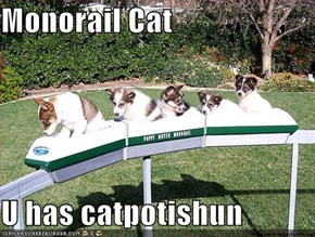 Monorail Cat  U has catpotishun