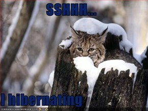 SSHHH...  I hibernating