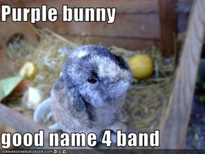 Purple bunny  good name 4 band