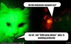 do the hoomans suspect us?