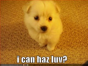 i can haz luv?