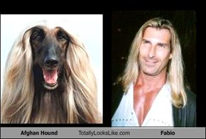 Afghan Hound Totally Looks Like Fabio