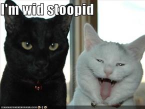 I'm wid stoopid