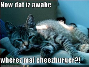 Now dat iz awake  wherez mai cheezburger?!