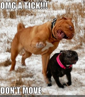 OMG A TICK!!!  DON'T MOVE