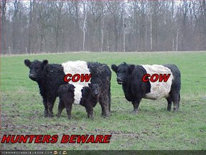 COW               COW HUNTERS BEWARE