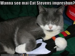 Wanna see mai Cat Stevens impreshun?
