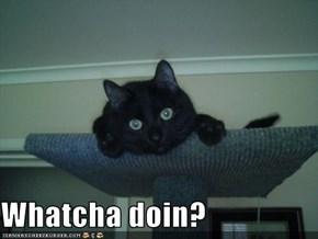 Whatcha doin?
