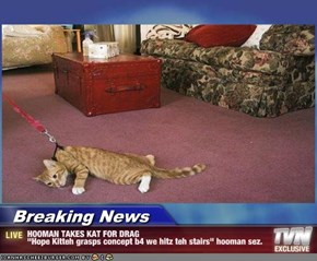 "Breaking News - HOOMAN TAKES KAT FOR DRAG ""Hope Kitteh grasps concept b4 we hitz teh stairs"" hooman sez."