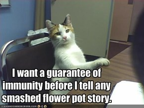 I want a guarantee of immunity before I tell any smashed flower pot story.