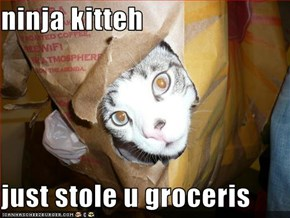 ninja kitteh   just stole u groceris