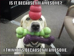 IS IT BECAUSE I'M AWESOME?  I THINK IT'S BECAUSE I'M AWESOME.