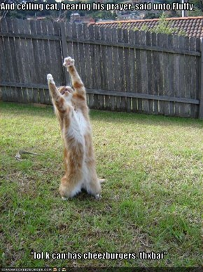 "And ceiling cat, hearing his prayer, said unto Fluffy,  ""lol k can has cheezburgers. thxbai"""