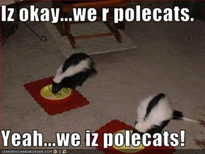 Iz okay...we r polecats.  Yeah...we iz polecats!